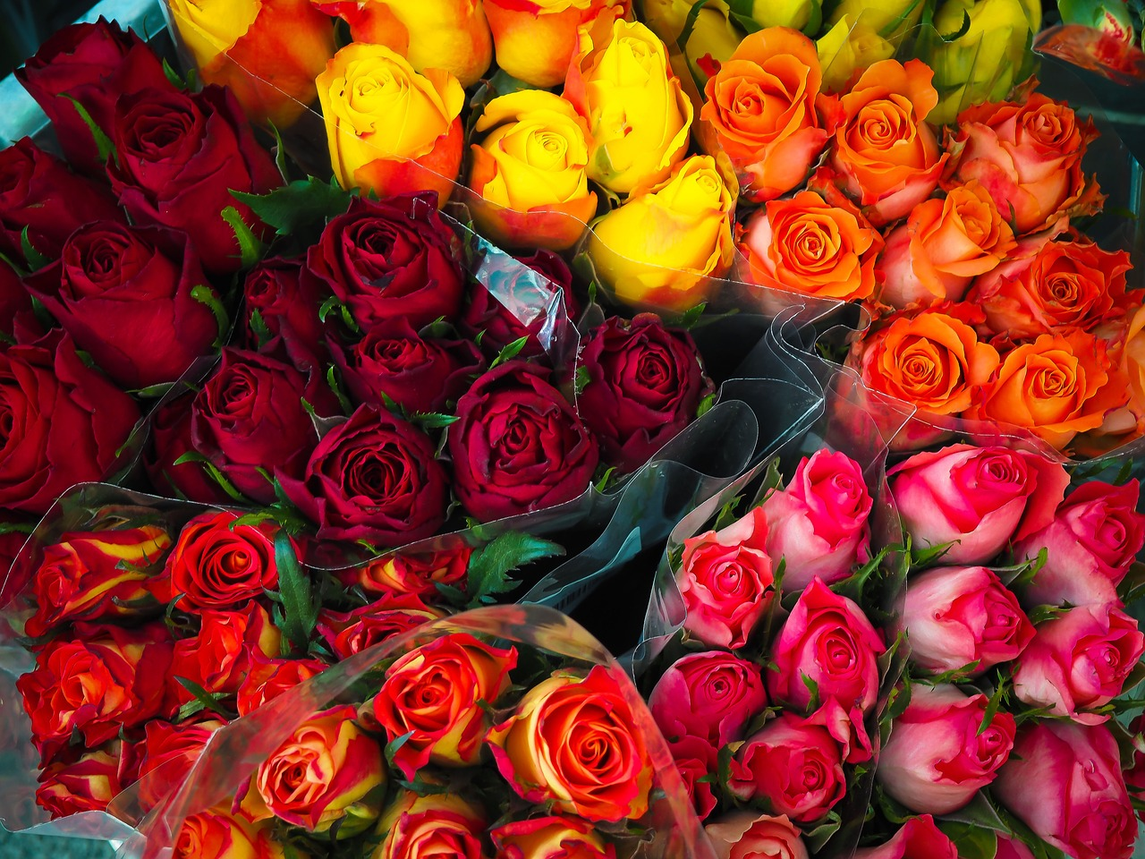 Give Colored Roses to say a special meaning | Cedar Brook Garden ...